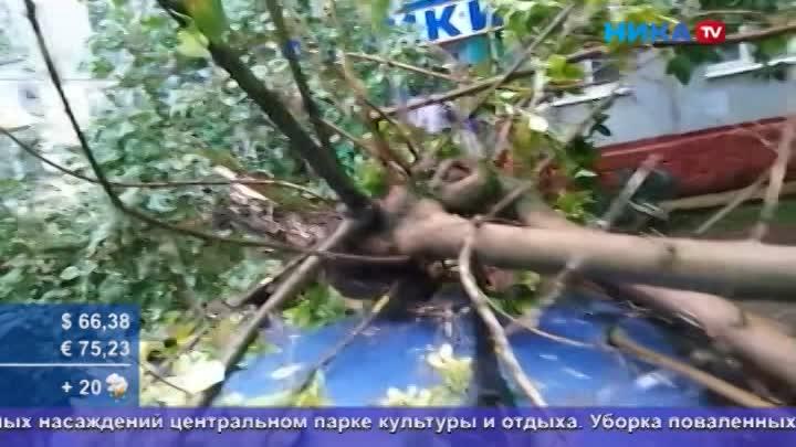 Упавшие деревья, оборванные провода: Хроника непогоды, обрушившейся наКалугу