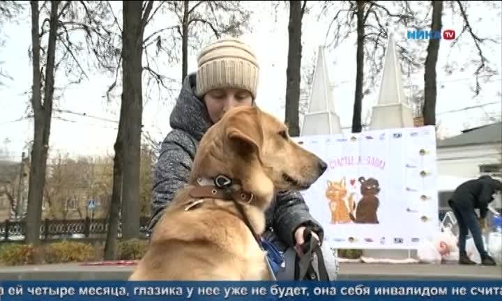 Организации и приюты Калужской области провели совместную выставку-раздачу животных