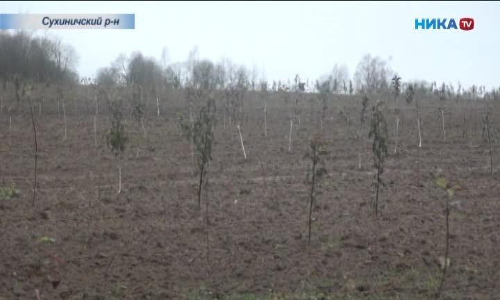 В Сухиничском районе Калужской области презентовали яблоневый сад
