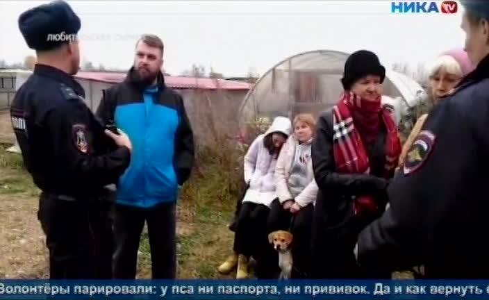 Калужские зоозащитники «со скрипом» вернули пса Гошу бывшей хозяйке