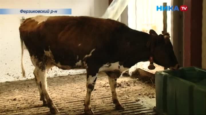 В Калужской области открылась 35-я роботизированная ферма