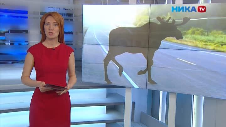 Лоси надороге: Дикие животные стали чаще выбегать напроезжую часть