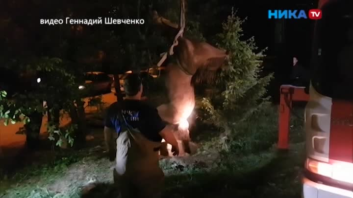 Нырнула влюк: ВКалуге вканализацию провалилась лошадь