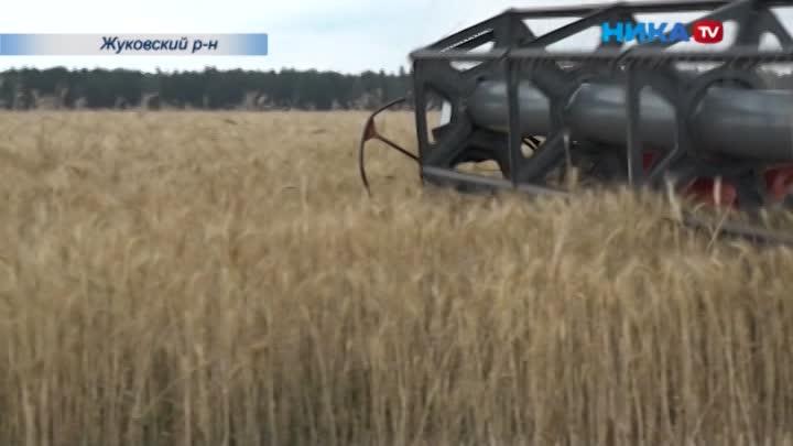 Заплющило: Вжуковской агрофирме используют особый способ хранения зерна