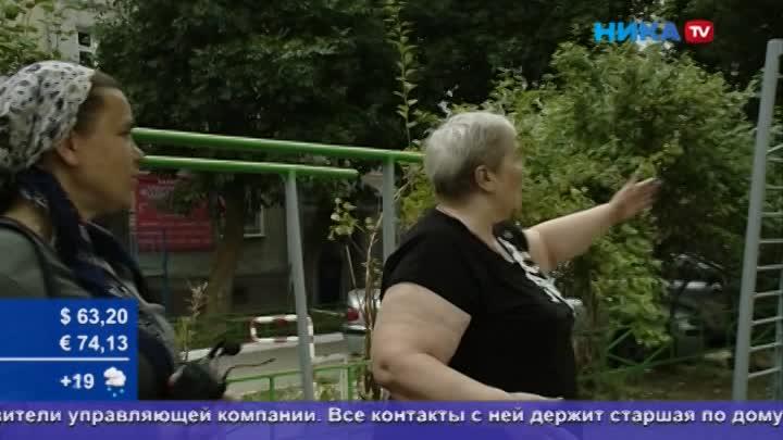 Проблемы сзеленью: Наулице Малоярославецкой пропали деревья